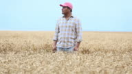 MS DS Farmer Standing in Field of Wheat, Looking Off into Distance / Oyster, Virginia, USA