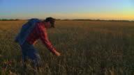 Farmer steht in dem Feld bei Sonnenuntergang