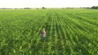 Luftaufnahme der Landwirt Wandern in das Feld Mais