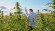 DS Farmer walking in the hemp field