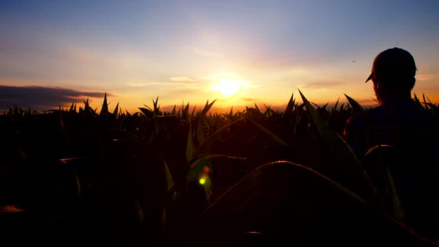 MS DS Farmer Walking Through Field Of Corn
