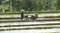 Farmer working at rice paddy in Bali, Indonesia