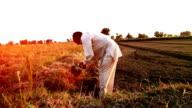 Farmer working in the field using hoe