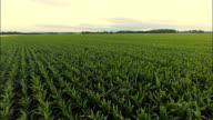 AERIAL Landwirt Arbeiten im Feld