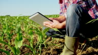 MS DS Landwirt arbeiten mit einem digitalen Tablet