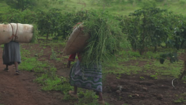 Farmers and Fieldworkers Carrying crops