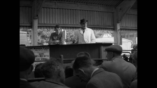 MONTAGE farmers bid for livestock at the cattle market / UK / Steer moves through market pens / man on podium talks to crowd / man raises arm / man...