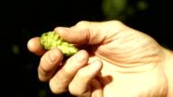 Farmer's Hand, die Hop Hütchen (4 k UHD zu/HD)