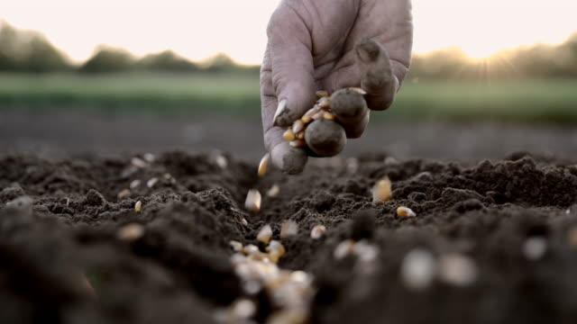 SLO MO Farmer's hand sowing seeds