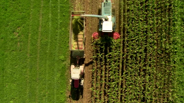 HD: Farmers Harvesting Corn With Machineries