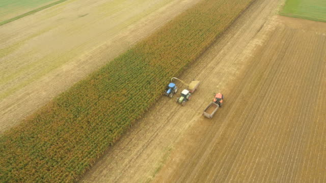 AERIAL Farmers Harvesting Corn With Tractors