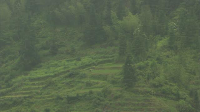 WS HA ZO Farmers in field on hillside, Guilin, Guangxi Zhuang Autonomous Region, China