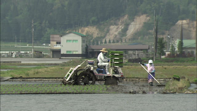 Farmers plant and hoe in a rice paddy.