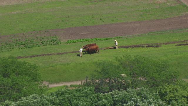 WS AERIAL POV Farmers ploughing field through ox plough, herd of sheep walking / Iowa, United States