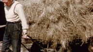 1975 MONTAGE Farmers preparing hay of the best quality, silage and roots for feeding to their livestock / United Kingdom