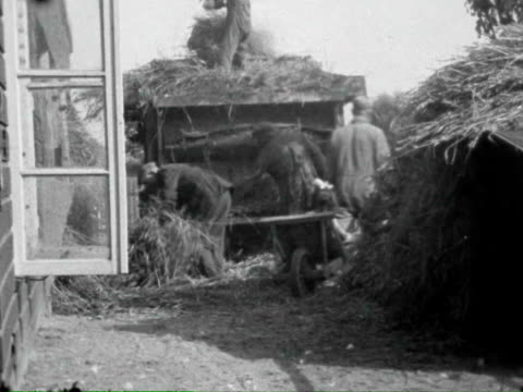 1943 B/W Farmers process hay on a farm and give little girl a ride in a wheelbarrow / Netherlands