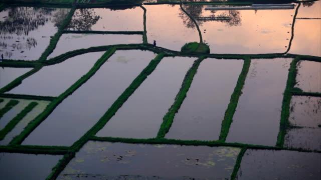 Farmers work at sunrise