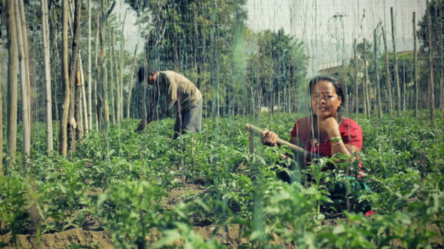 Farmers working in farm.