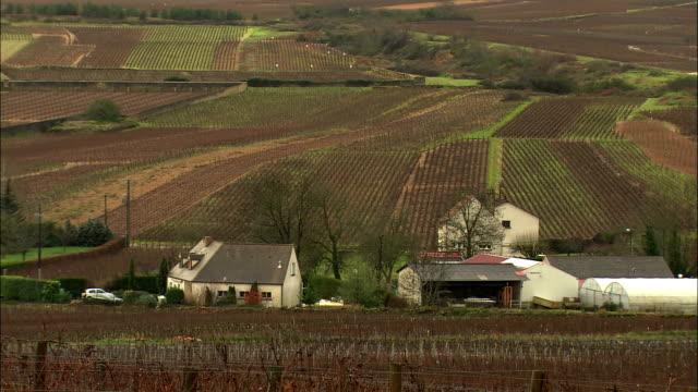 WS Farmhouses amongst vineyards / Burgundy, France