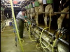 Farming reform supermarket pricing Hampshire Alton i/c INT Dairy farmer attaching milking apparatus to cows in barn EXT William White interviewed SOT...