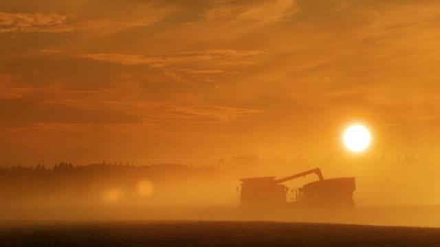Farming under a golden sun