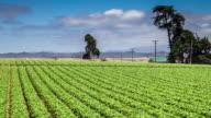 Farmland in Central California - Time Lapse
