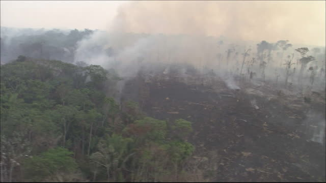 Farmland  on cleared rainforest  Tracking Shot  Smoke rising from charred land  Wide Shot  Aerial Shot