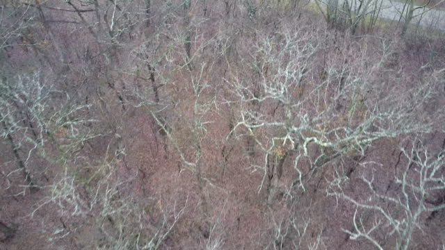 Fast Flying Above Dry Leafless Treetops