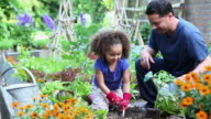 WS DS Father Helping Young Daughter Plant Tomatoes in Home Vegetable Garden / Richmond, Virginia, USA