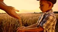 SLO MO Vater gießen Getreide Mais in Kind hand