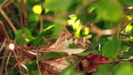 Feeding baby birds in nest