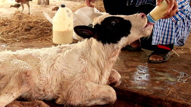 Fütterung Baby mit Milchflasche aus Kalbsleder
