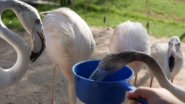 Alimentazione uccelli Flamingo
