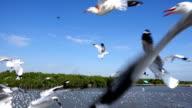 Feeding Seagul