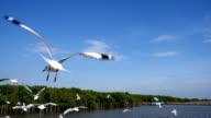 Feeding Seagull