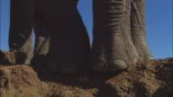 LA CU feet of African elephant standing on edge of riverbank