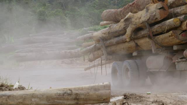 WS Felled trees and trucks moving them / Tawau, Sabah, Malaysia