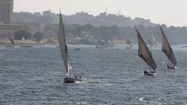 Feluccas in full sail on the River Nile