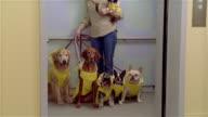 MS, ZI, Female dog walker with dogs wearing rain coats in elevator