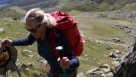 Female hiker ascends through alpine meadow, mountains