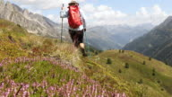 Female hiker walks through alpine meadow, in mountains