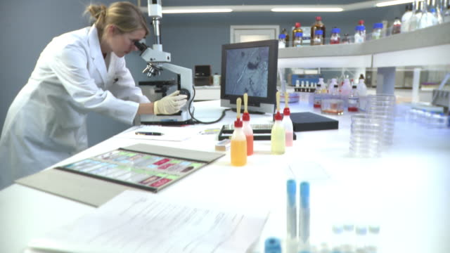 MS TU TD Female lab tech looking into microscope connected to monitor  / Berlin, Germany