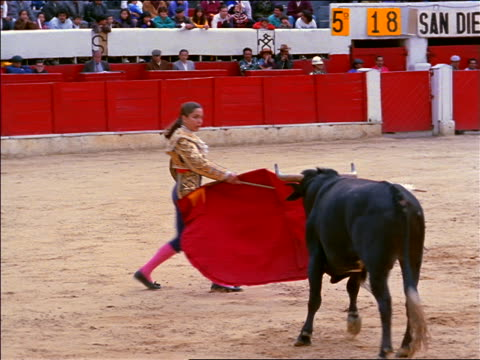 Female matador with cape + sword dodging charging bull with banderillas in neck / Bogota, Colombia