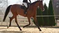 SLO MO TS Female rider riding horse in sunny arena