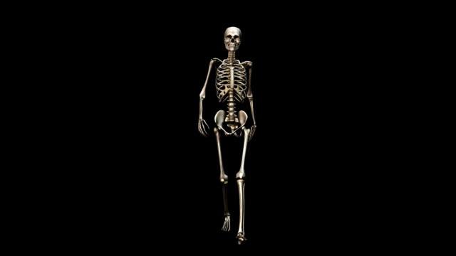 'Female skeleton, walking'