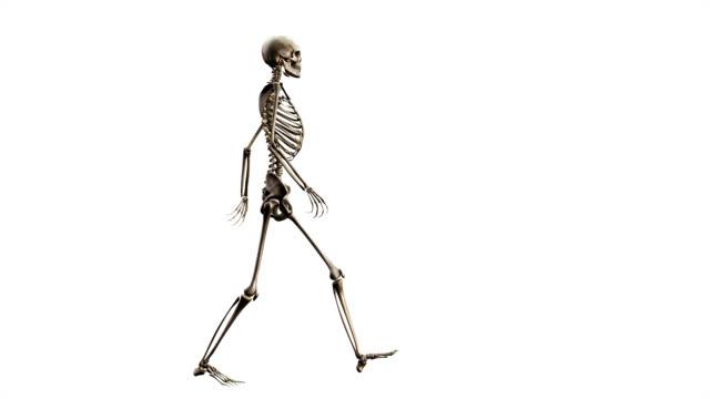 female skeleton walking stock footage video | getty images, Skeleton