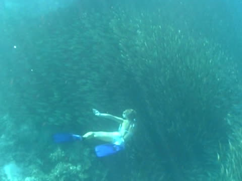 female snorkeller swims down through bait ball away from camera