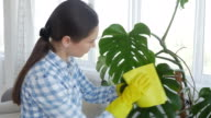 Female take care for her plants in the room