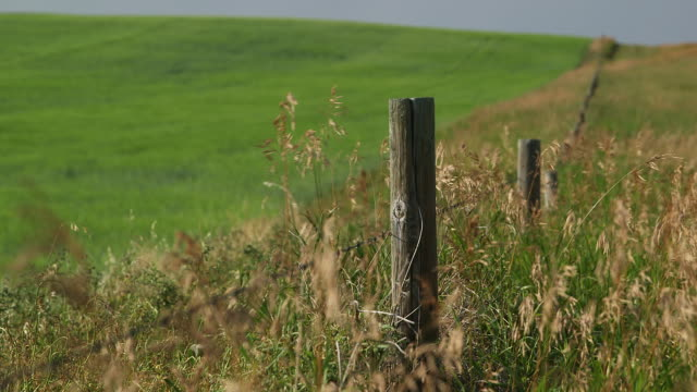Fencepost in field.