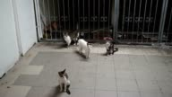Feral cats roam the entrance to a train station terminal
